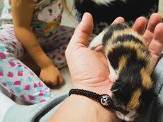 Наша Кошка РОДИЛА ! Котята Кушают Как Алиса Назовет Котят