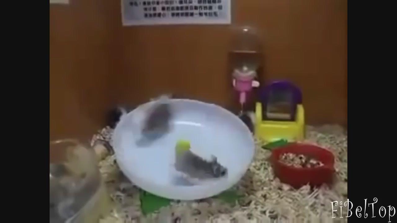 Смешные видео с животными.